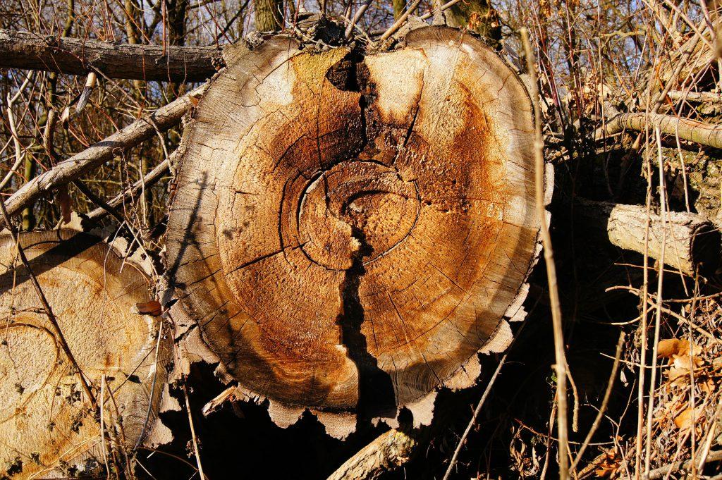 πλεονεκτήματα & μεινεκτήματα ξύλου
