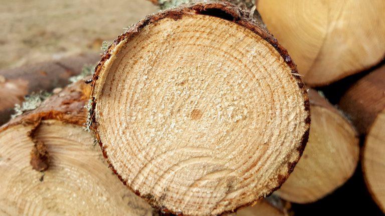 έντομα και ζημιές στο ξύλο